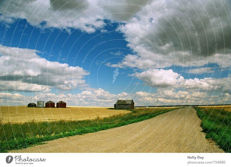 Licht und Schatten schön alt Himmel blau Sommer Haus Wolken gelb Straße Arbeit & Erwerbstätigkeit Freiheit Wege & Pfade Landschaft Feld Landwirtschaft Bauernhof