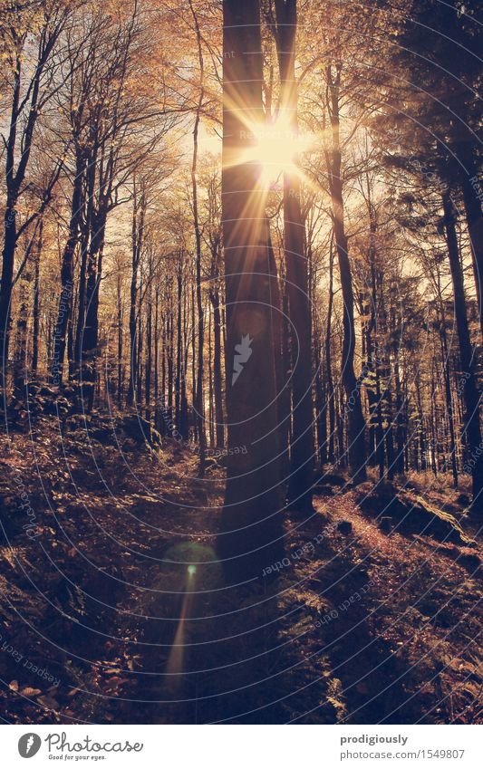 Wanderlust Natur Pflanze Sommer Baum Sonne Erholung Landschaft ruhig Wald Berge u. Gebirge Umwelt Herbst Wege & Pfade Gras Sport Holz