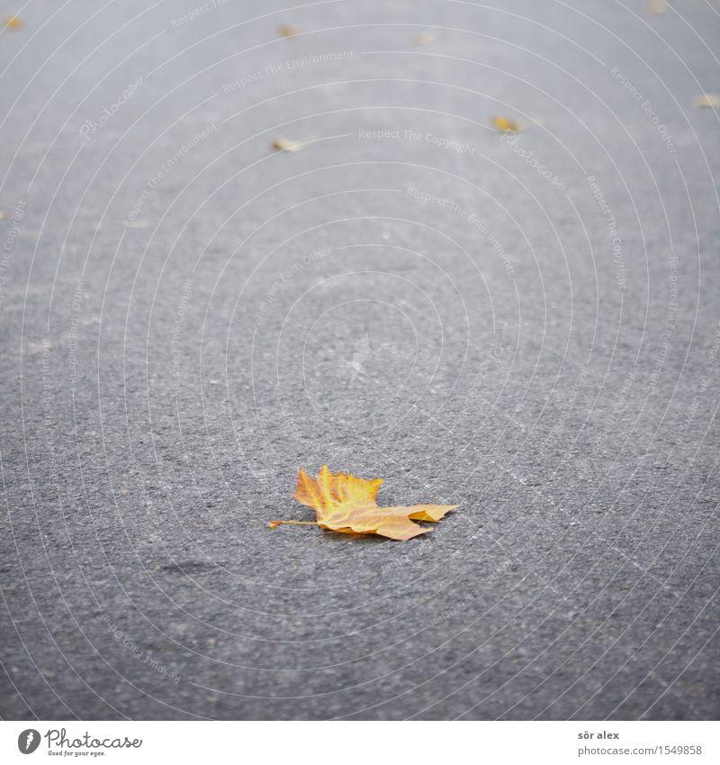 DER HERBST Umwelt Natur Pflanze Herbst Klima Blatt Herbstlaub Straße Asphalt nachhaltig natürlich grau orange Traurigkeit Trauer Überleben Verfall Vergangenheit