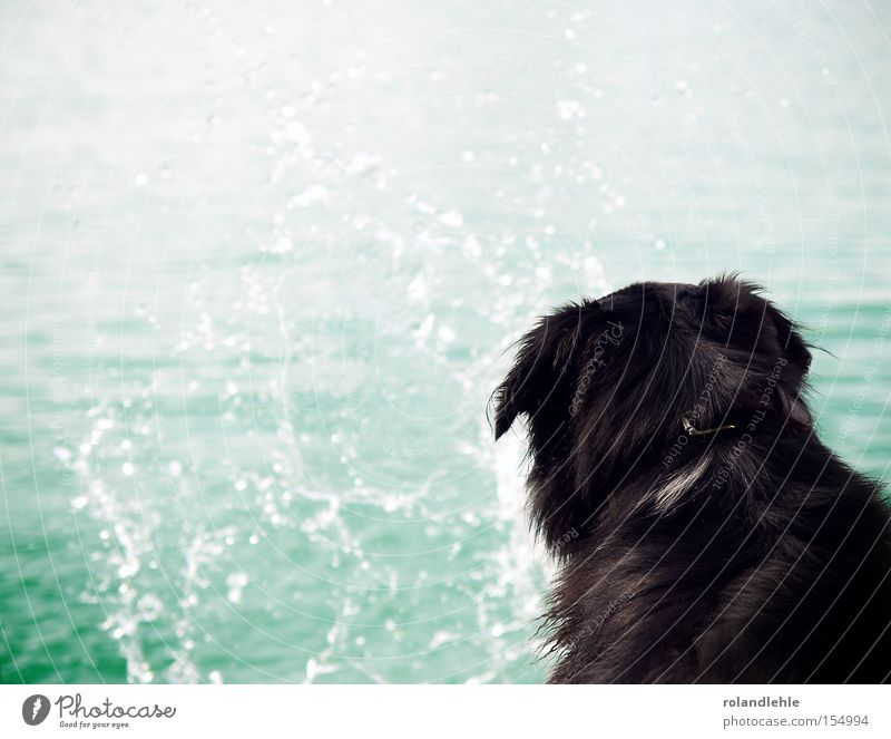 Träumen Hund Wasser spritzen Wassertropfen Meer See Baggersee blau Halsband träumen Tropfen Sommer Hundehalsband