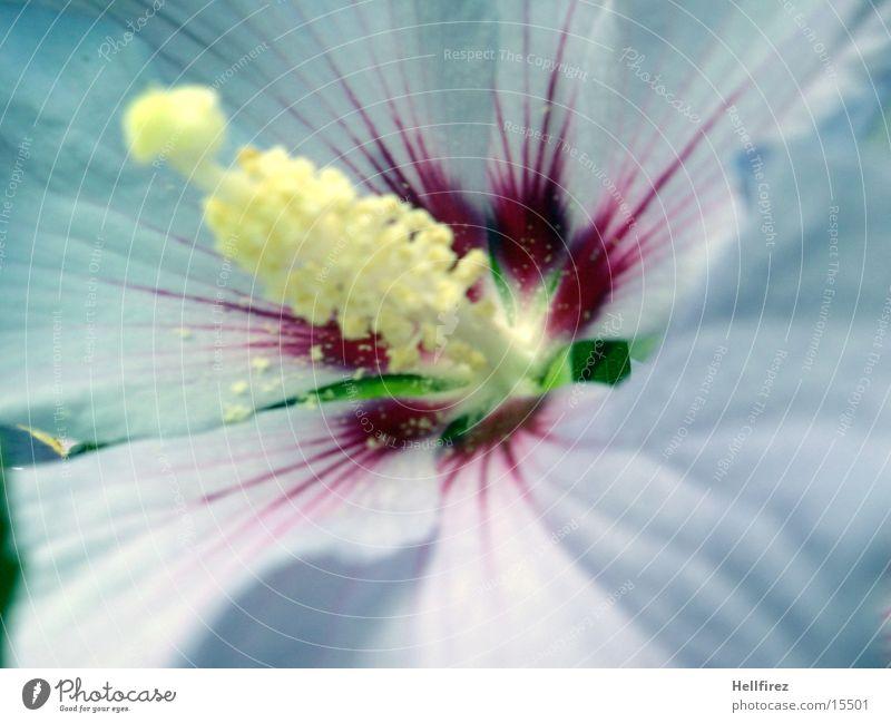 Blütentraum [6] grün gelb Blüte violett