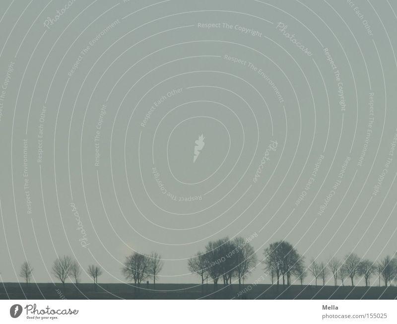 Geisterallee Landschaft Baum Allee Ferne bleich schlechtes Wetter Nebel Dunst Himmel blau grau dunstig