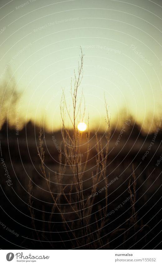 Zart am Morgen Himmel Sonne Pflanze Arbeit & Erwerbstätigkeit Gefühle Garten Wachstum Frost obskur Osten aufwachen Krähe aufgehen