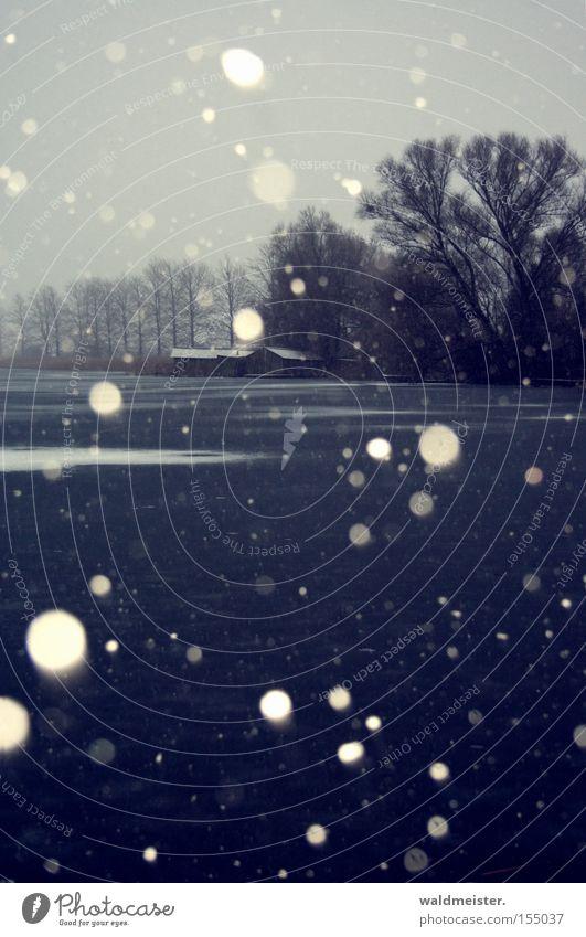 Schnee an der Feisneck Wasser Baum Winter kalt Schneefall See Eis Frost Mecklenburg-Vorpommern