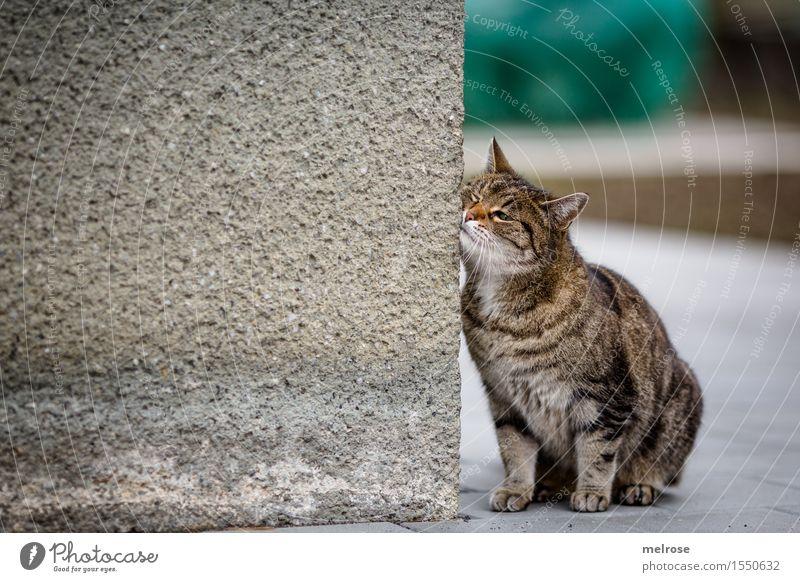 """"""" verschmust """" Stil Design Frühling Wand Haustier Katze Tiergesicht Fell Pfote 1 Hausmauer anlehnen berühren Erholung genießen sitzen warten Freundlichkeit"""