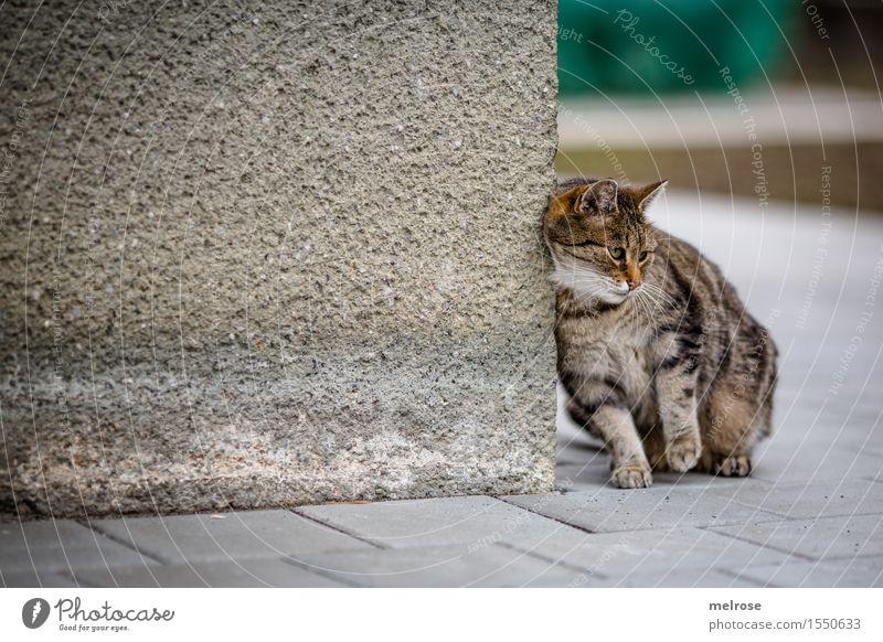 LAZY Friday Katze schön Erholung Tier Stil grau braun Design Zufriedenheit sitzen genießen süß niedlich weich Coolness Pause