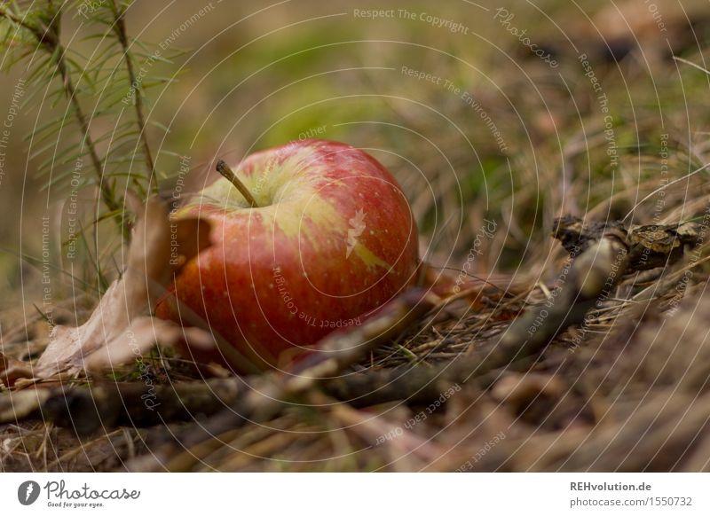 ...und Apfelsaft gibt Pokerkraft! Natur Wald Herbst Frucht liegen Bioprodukte Fallobst