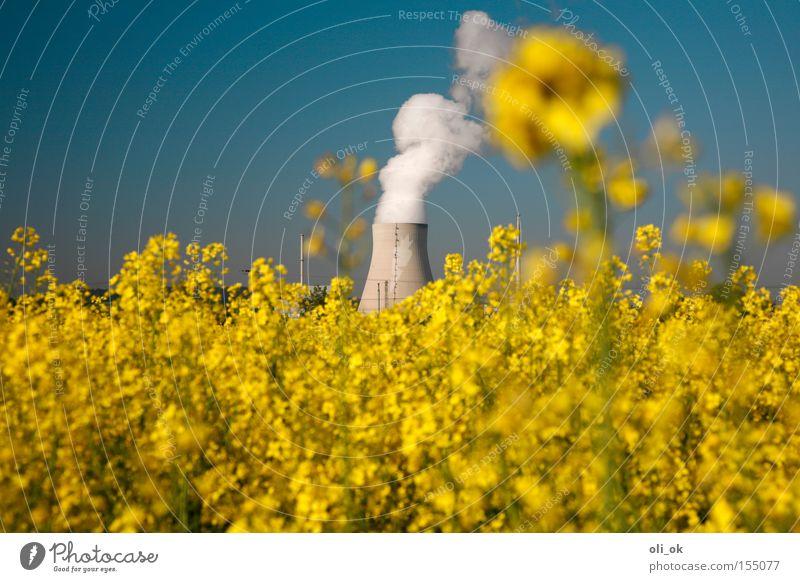 Biostrom gelb Rohstoffe & Kraftstoffe Industrie Elektrizität ökologisch Energie Raps Stromkraftwerke Kernkraftwerk Biodiesel Erneuerbare Energie Kühlturm