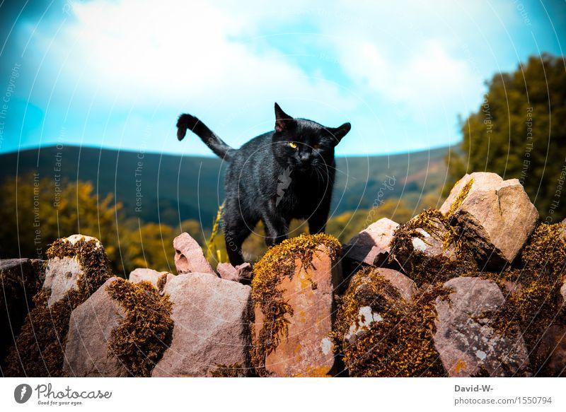 kleiner Streuner Katze Natur schön Sommer Landschaft Wolken Tier dunkel schwarz Umwelt Wand Herbst Frühling Bewegung Mauer elegant