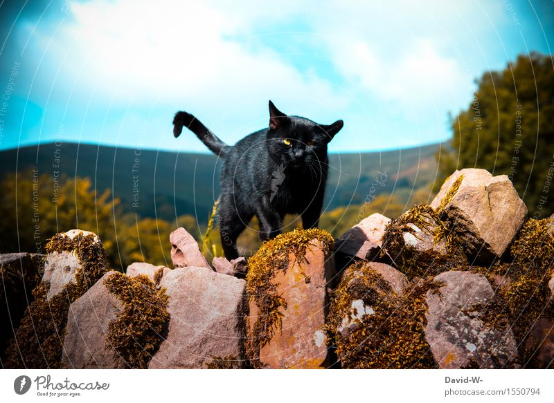 kleiner Streuner Umwelt Natur Landschaft Wolken Frühling Sommer Herbst Schönes Wetter Mauer Wand Tier Katze 1 beobachten Bewegung Kommunizieren elegant Neugier