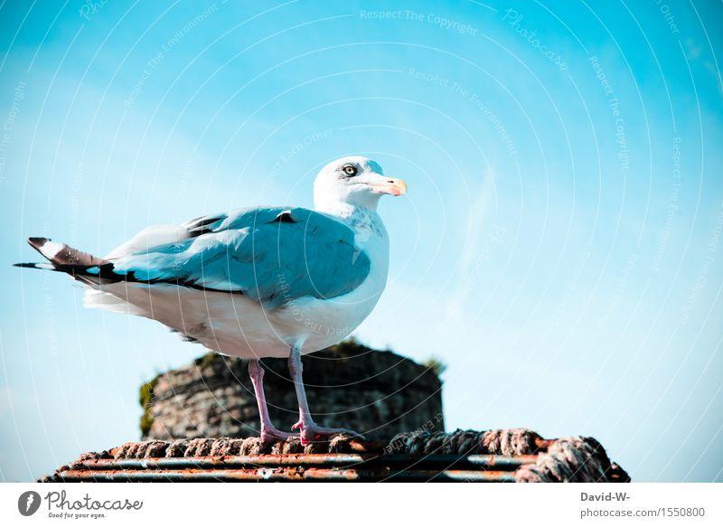 ...Meins... Himmel Natur schön Sommer ruhig Tier Umwelt Frühling Küste Vogel warten Insel Flügel beobachten Schönes Wetter Ostsee