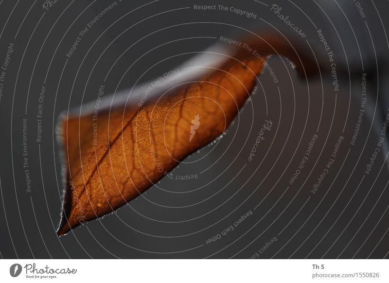 Blatt Natur Pflanze schön Blatt ruhig Winter schwarz Herbst natürlich braun Design orange elegant authentisch ästhetisch einfach