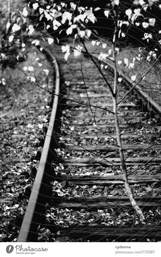 Zurück zur Natur Baum ruhig Einsamkeit Herbst Zeit Wachstum Vergänglichkeit Gleise verfallen Wiederholung Birke erobern Herz-/Kreislauf-System stilllegen