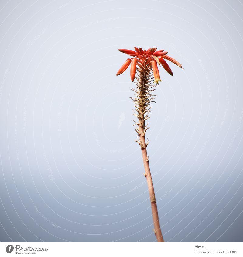 wachsen & gedeihen   im Herbst des Lebens Himmel Pflanze schön rot Einsamkeit Blatt Blüte natürlich ästhetisch stehen Schönes Wetter Vergänglichkeit