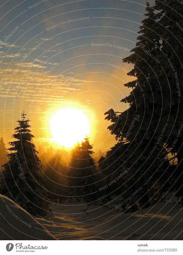 Winter Sonne Sonnenuntergang kalt Schneelandschaft Brocken Winterwald Wintersonne