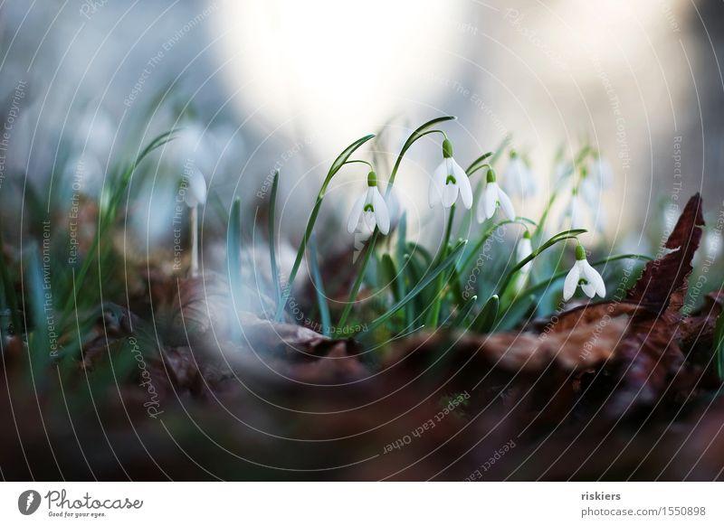 springtime Umwelt Natur Pflanze Frühling Blume Schneeglöckchen Wald Blühend grün weiß mehrfarbig Außenaufnahme Menschenleer Tag Licht Schatten Kontrast