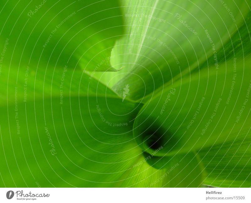 Bizarre Formen [2] Blatt grün grell Silhouette Mais Profil Kontrast