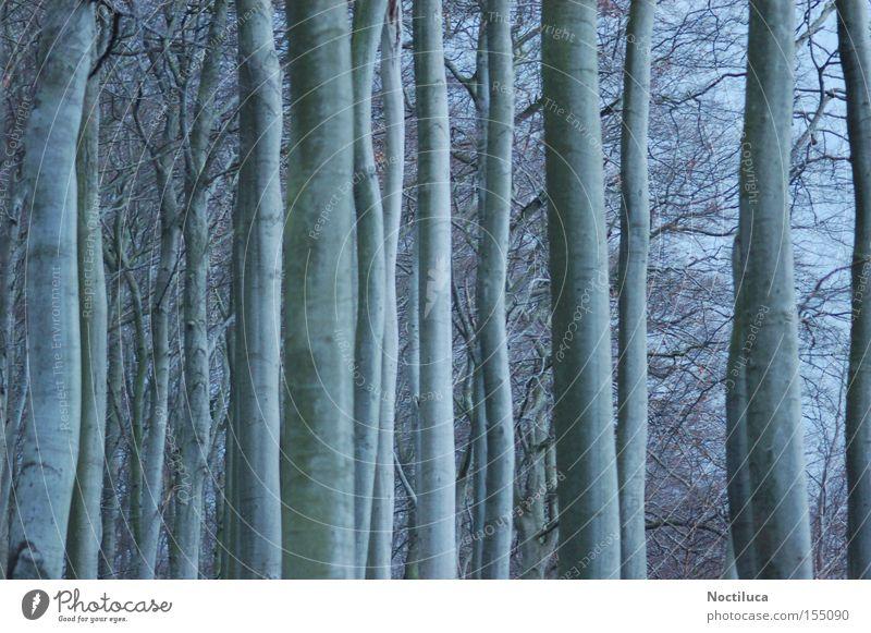 Geisterwald Natur Baum Winter Wald Stimmung Rügen spukhaft Moringa Baum