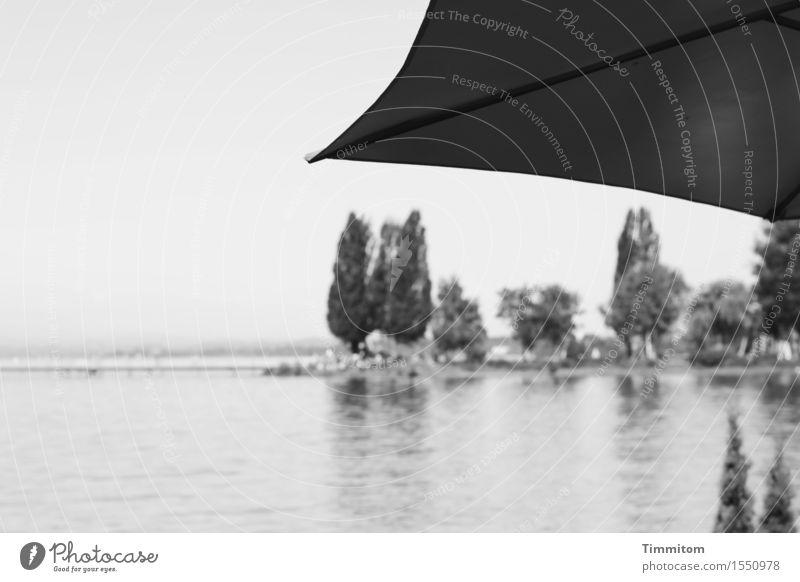 Beschattung. Natur Landschaft Pflanze Wasser Himmel Schönes Wetter Baum Sträucher Seeufer Bodensee Sonnenschirm grau schwarz ruhig Schwarzweißfoto Außenaufnahme