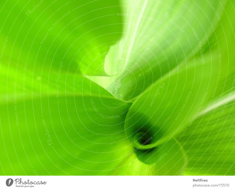 Bizarre Formen [4] grün Blatt grell Mais