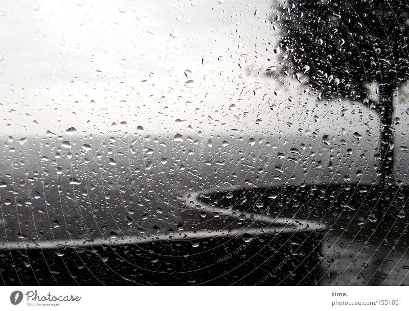 Laune der Natur Umwelt Horizont Klima Wetter Regen Baum nass grau geschlängelt Aussicht Fensterscheibe Wassertropfen Schwache Tiefenschärfe Menschenleer