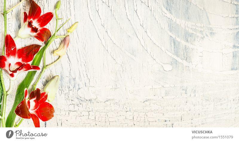 Shabby Hintergrund mit roten Orchideen Natur Pflanze Sommer Blume Blatt Blüte Stil Hintergrundbild hell Design Häusliches Leben Dekoration & Verzierung Tisch