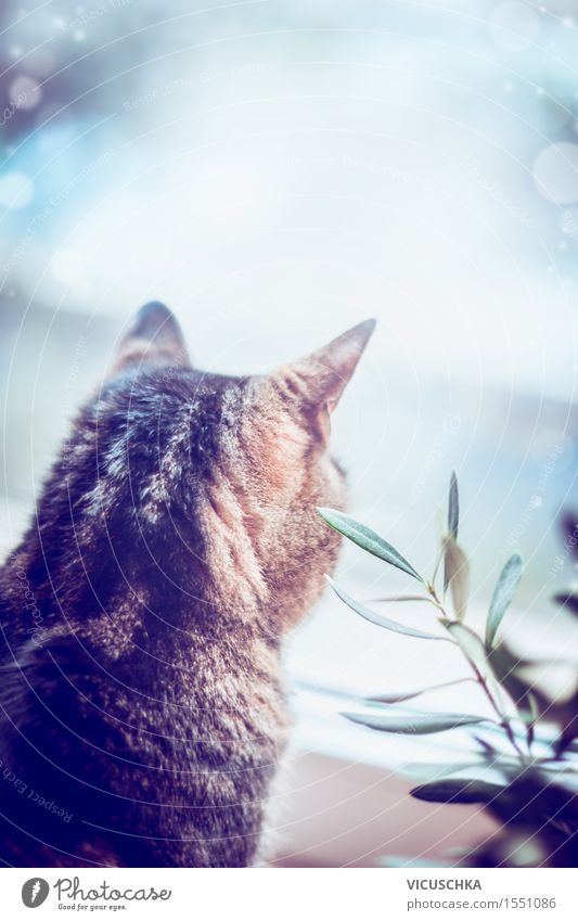 Katze kuckt aus dem Fenster Natur Pflanze ruhig Tier Stil Hintergrundbild Stimmung Design Wohnung Häusliches Leben Haustier gemütlich Tierliebe Retro-Farben
