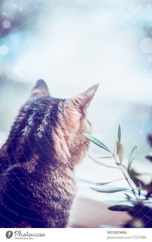 Katze kuckt aus dem Fenster Stil Wohnung Natur Tier Haustier 1 Stimmung Tierliebe Design Hintergrundbild Pflanze Häusliches Leben gemütlich ruhig Retro-Farben