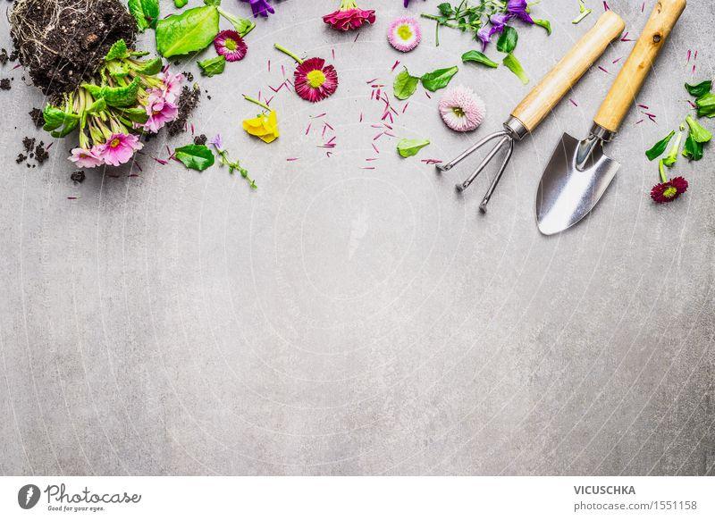 Garten Blumen und Pflanzen mit Gartengeräte Stil Design Freizeit & Hobby Sommer Natur Frühling Blatt Blüte Beton Blühend Blumenhändler Dekoration & Verzierung