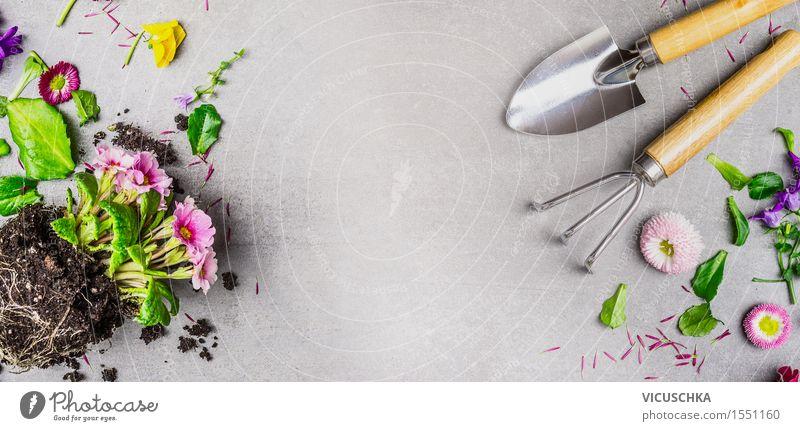 Sommerblumen und Gartengeräte Stil Design Dekoration & Verzierung Natur Frühling Herbst Blume Blatt Blüte Blühend rosa Hintergrundbild Gerät Pflanze