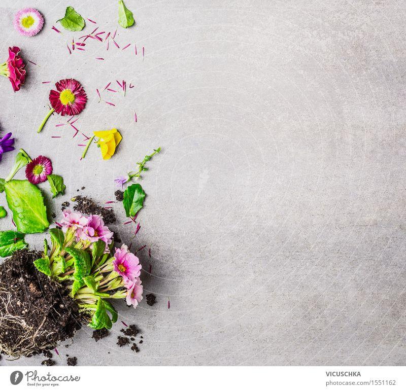 Sommerblumen Pflanzen mit Blüten und Blätter Stil Freizeit & Hobby Häusliches Leben Garten Dekoration & Verzierung Tisch Natur Frühling Herbst Blume Blatt