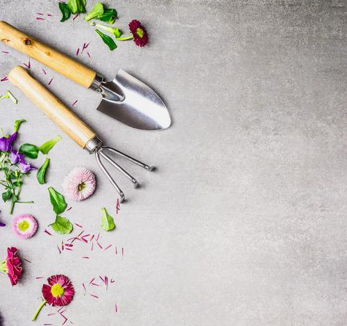 Gartengeräte und Blumenteile Natur Pflanze Sommer Blatt Blüte Herbst Frühling Stil Design Freizeit & Hobby Häusliches Leben Gerät Gartenarbeit Haken