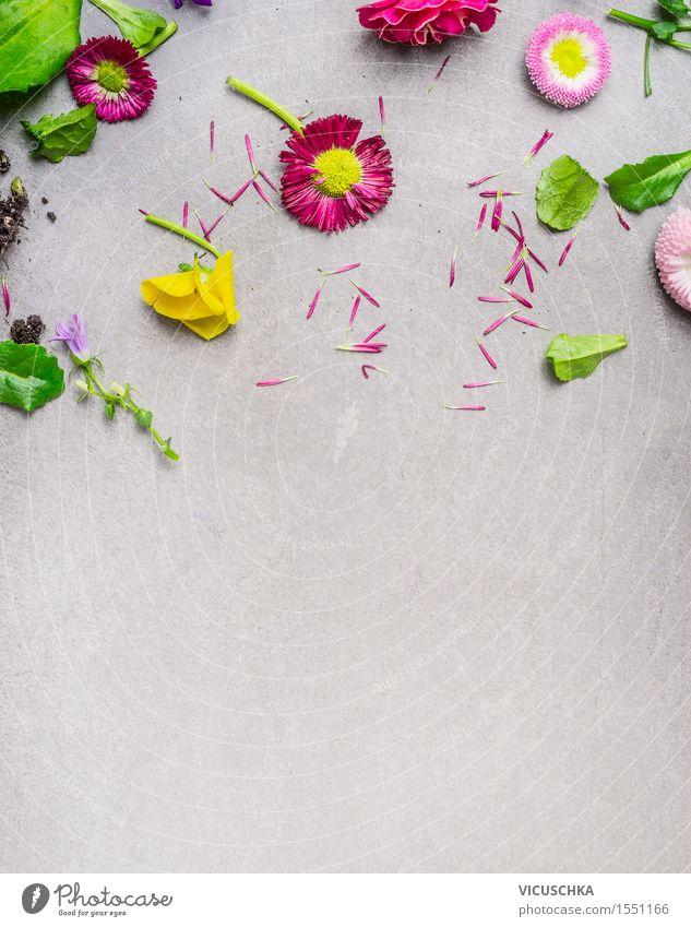 Muster mit Blumenteile Natur Pflanze grün Sommer rot Blatt Blüte Wiese Stil Garten rosa Design Dekoration & Verzierung Tisch Blühend