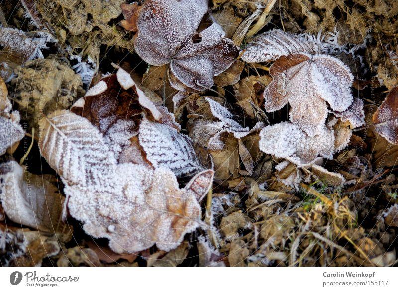 Frost II. Natur Winter Blatt kalt Schnee Eis Frost gefroren