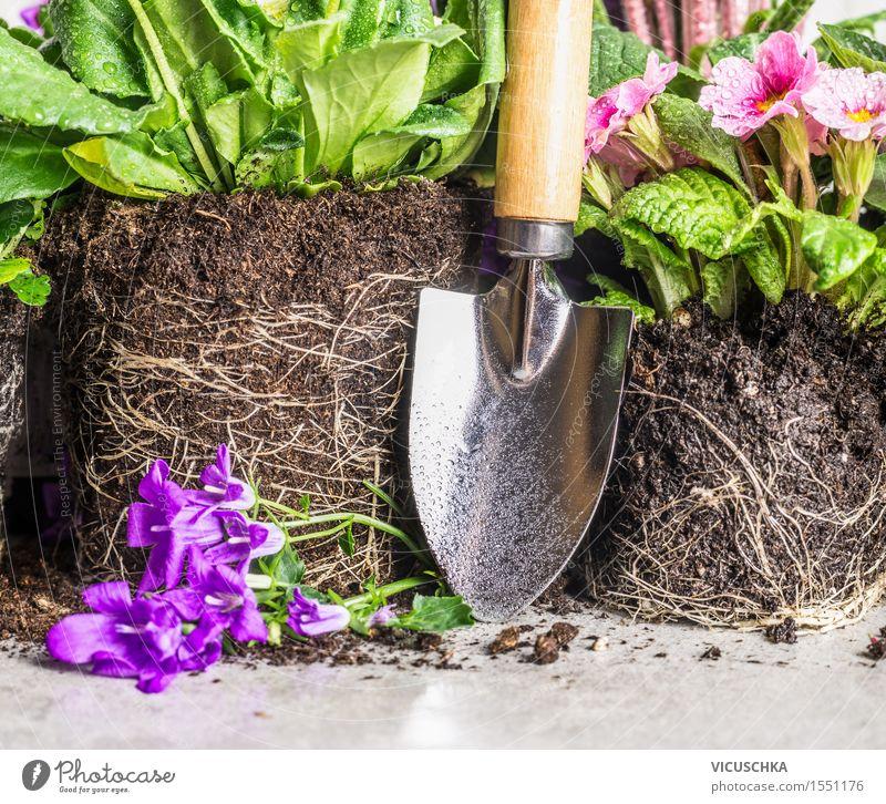 Handschaufel und Gartenblumen Stil Dekoration & Verzierung Tisch Natur Pflanze Frühling Sommer Herbst Blume Park Blühend Schaufel Erde Wurzel Pflanzenteile