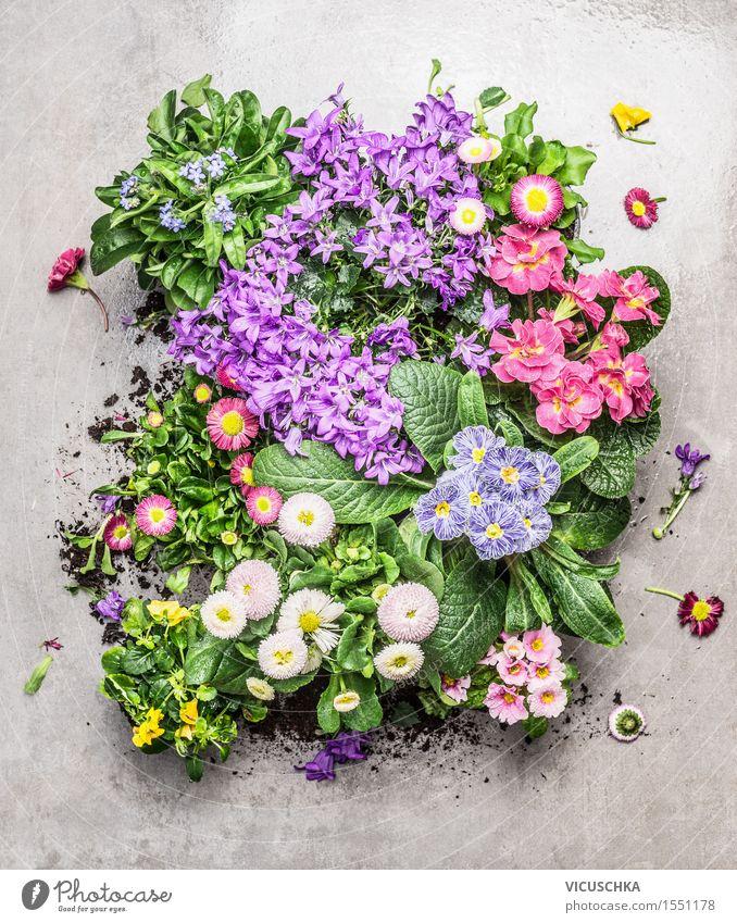 Verschiedene Sommer Blumen in Töpfen für Garten Stil Design Freizeit & Hobby Tisch Natur Pflanze Frühling Herbst Blatt Blüte Park Stein Blühend gelb rosa