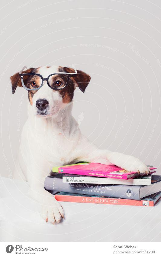 Hund mit Büchern lesen Sommerurlaub Tier Haustier Tiergesicht Fell Pfote 1 Dekoration & Verzierung beobachten Denken Blick sitzen Neugier niedlich braun grau