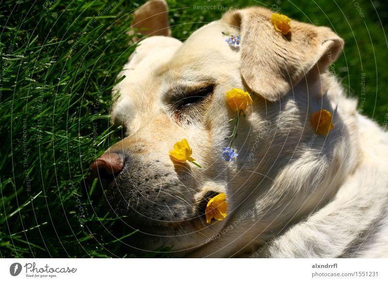 daydreaming Hund Natur blau grün weiß Blume Erholung Tier gelb Blüte Gras Glück Garten frei genießen niedlich