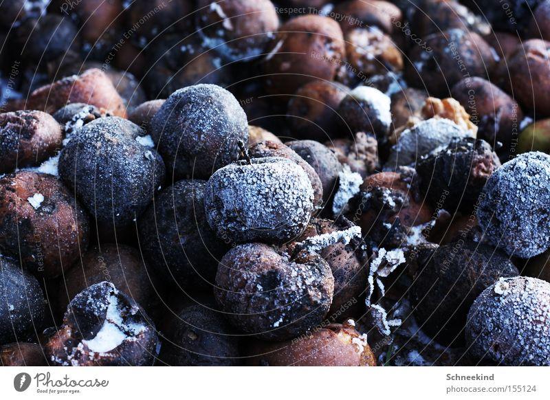 Obst ist gesund... Winter Schnee Eis braun Frucht Frost Vergänglichkeit Apfel gefroren verdorben Haufen entsorgen Pflanze Dessert faulig Übelriechend
