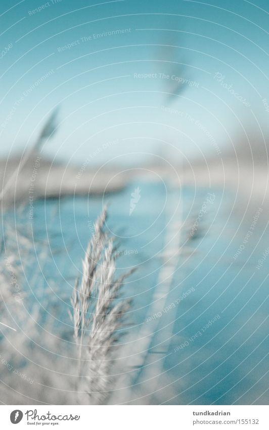 Winter am See blau kalt Gras träumen grau Natur Unschärfe Lensbaby