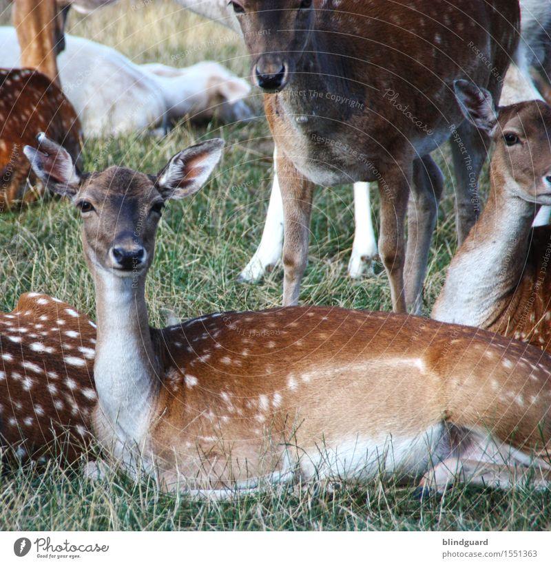Vollständig REHabilitiert Reh Hirsch Rotwild Damwild Fell Punkte Flecken Farbfoto Menschenleer Wald braun Säugetier Wildtier Außenaufnahme Natur Tier
