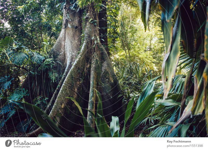 ° Natur Ferien & Urlaub & Reisen Pflanze grün Sommer Baum Ferne Umwelt Wärme Tourismus wild Kraft ästhetisch Sträucher Ausflug Schönes Wetter