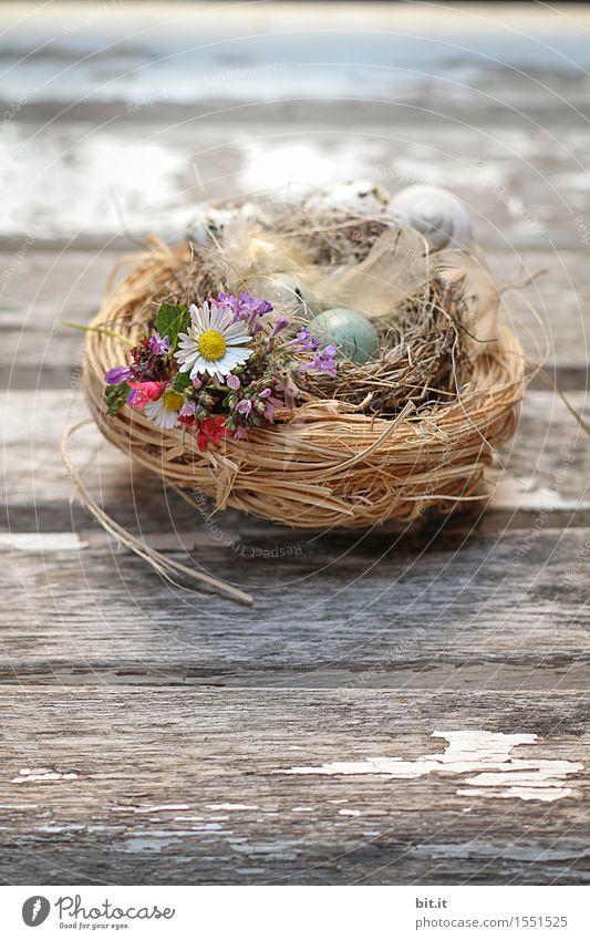 Osternest Feste & Feiern Natur Frühling Gras Moos Dekoration & Verzierung natürlich braun Osterei Osterhase Nest Osterwunsch Ostergeschenk Vogeleier Holz