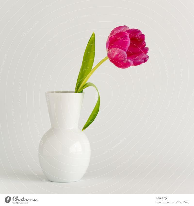 Tulpe² Pflanze Blume Blatt Blüte grün rosa weiß Frühlingsgefühle Vase Blühend Farbfoto Studioaufnahme Menschenleer