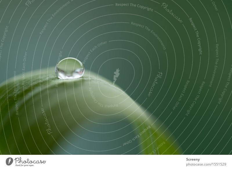 Spannung Pflanze grün Wasser Blatt klein frisch Wassertropfen nass Oberflächenspannung