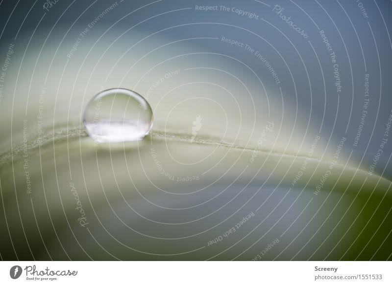 Rutschgefahr Wassertropfen Pflanze Blatt klein nass rund grün zerbrechlich frisch Oberflächenspannung Farbfoto Makroaufnahme Menschenleer Tag