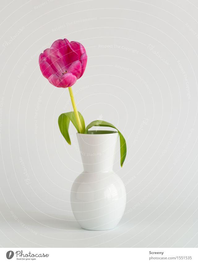 Frühling to go #2 Natur Pflanze Blume Tulpe Blatt Blüte Vase grün rosa weiß Farbfoto Innenaufnahme Studioaufnahme Detailaufnahme Menschenleer Tag