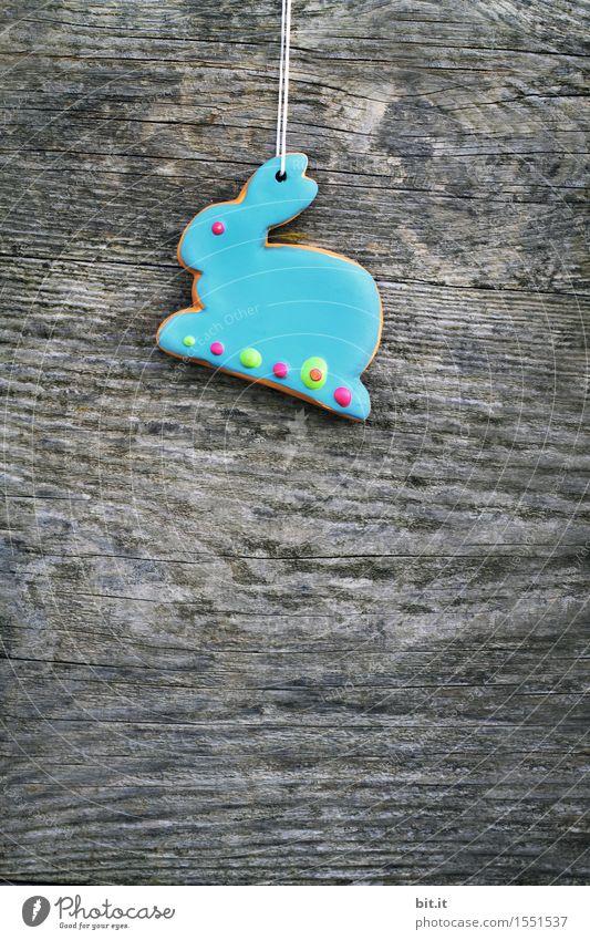 """""""Blue Monday Bunny"""" Feste & Feiern Ostern blau Hase & Kaninchen Schokolade Osterhase Osternest Osterwunsch Haken Holz altehrwürdig Farbfoto Außenaufnahme"""