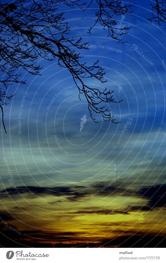 Sonntagsspaziergang Himmel Baum blau rot Wolken gelb grau orange Spaziergang Ast Sonnenuntergang Sonntag Farbverlauf