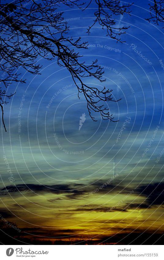 Sonntagsspaziergang Himmel Baum blau rot Wolken gelb grau orange Spaziergang Ast Sonnenuntergang Farbverlauf
